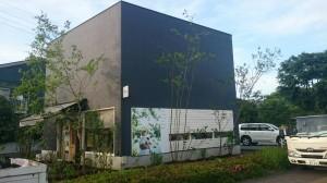 cozy 植栽