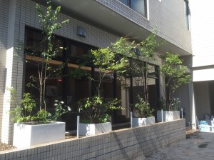 cozy植栽 大型プランター