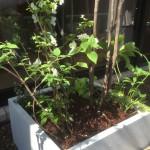 COZY 植栽 プランター