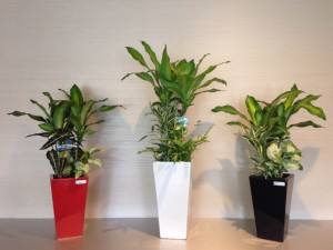 cozyの庭 観葉植物 寄せ植え 入荷