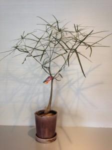 cozy 熊本 観葉植物