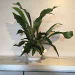 cozy 観葉植物 お祝い 新築