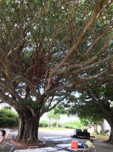 cozy garden 庭 沖縄